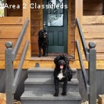 Cabin Rentals 3 miles from TIEC