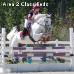 EXPERIENCED SUPERSTAR BN EVENT PONY