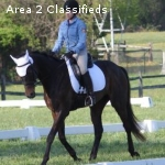 Flashy OTTB with loads of potential