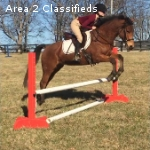 Incredibly Sweet and Athletic Sport Pony