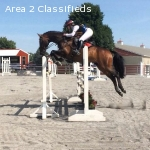 Upper level event rider available for training and lessons