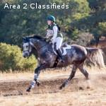 Wonderful Event Horse for Sale