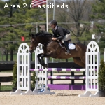 Young, Imported Gelding with Lots of Talent!