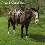 excellent Quarter Horse