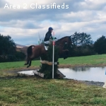 Experienced and Competitive 2* Horse