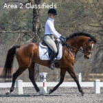 Experienced Novice/Training Horse