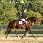 High Fashion- training level event horse