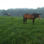 Horse Farm for Lease maintained by owner