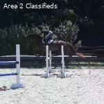 Lovely young mare- showing novice, schooling training