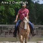 Lucy Quarter Horse Gelding