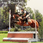 New Zealand TB Event Horse for Sale